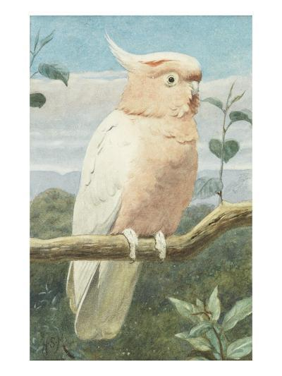 A Leadbetter's Cockatoo (W/C)-Henry Stacey Marks-Giclee Print