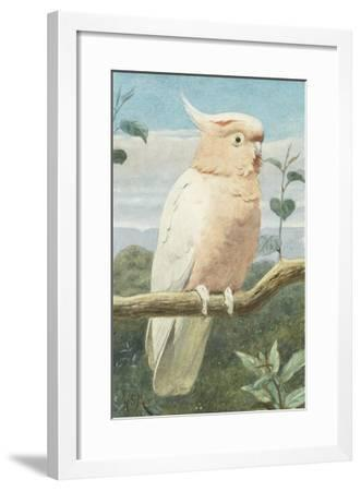 A Leadbetter's Cockatoo (W/C)-Henry Stacey Marks-Framed Giclee Print