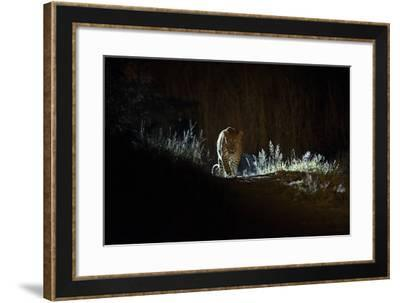 A Leopard, Panthera Pardus, Walking at Night-Roy Toft-Framed Photographic Print