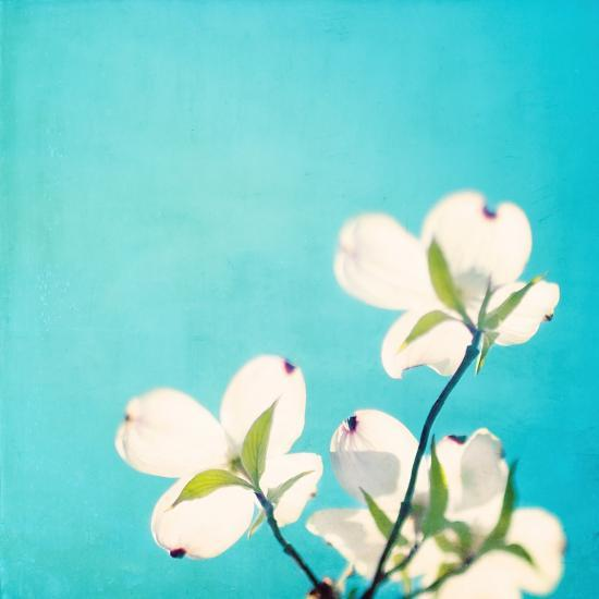 A Life So Colorful-Carolyn Cochrane-Photographic Print