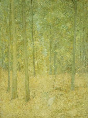 https://imgc.artprintimages.com/img/print/a-light-in-the-forest_u-l-p1y1ev0.jpg?p=0