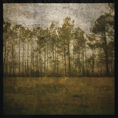 A Line of Pines-John W Golden-Giclee Print
