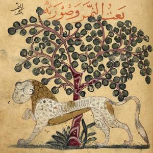A Lion Standing Beneath a Tree
