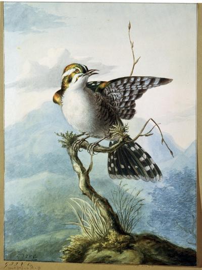 A Little Bird, 1798-Georgius Jacobus Johannes van Os-Giclee Print