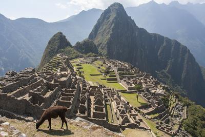 A Llama Grazing on the Grounds of Machu Picchu, an Ancient Inca City-Jonathan Irish-Photographic Print