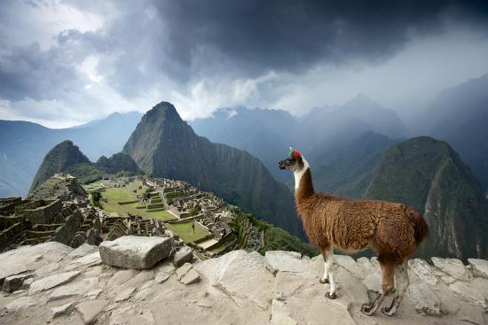 A Llama Overlooks the Pre-Columbian Inca Ruins of Machu Picchu-Jim Richardson-Premium Photographic Print