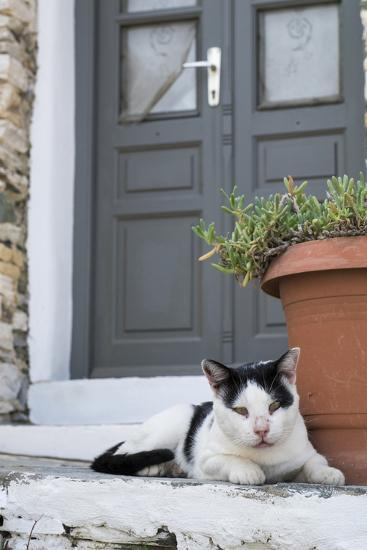 A Local Cat Rests in Front of a Doorway-Krista Rossow-Photographic Print