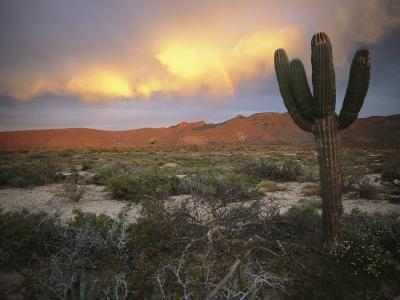 A Lone Cactus in a Desert Scene-Ed George-Photographic Print