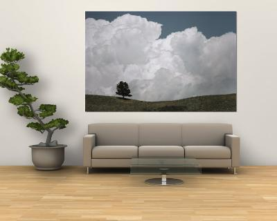 A Lone Ponderosa Pine Tree under a Cloud-Filled Sky-Annie Griffiths-Wall Mural