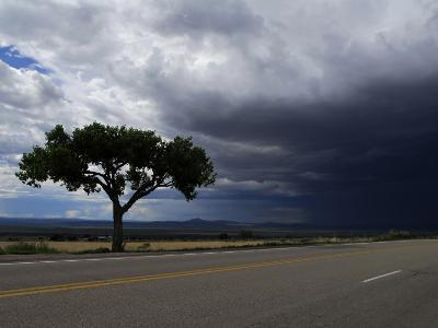 A Lone Tree on Highway 68 to Taos and Storm Clouds-Raul Touzon-Photographic Print