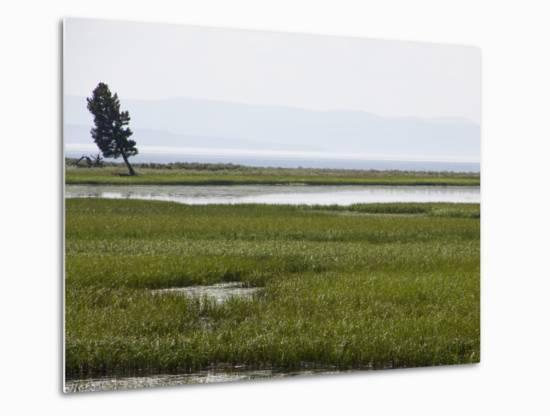 4cba185abc83e A Lone Tree Stands in Grassy Wetlands Surrounding Yellowstone LakeBy Stacy  Gold