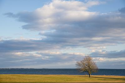 A Lone Tree Stands on the Shore of Long Island Sound at Harkness State Park-Michael Melford-Photographic Print