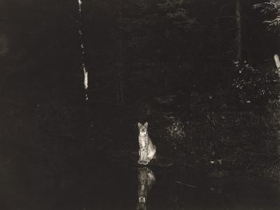 A Lynx Photographed at Night by Wildlife Photographer George Shiras-George Shiras-Photographic Print
