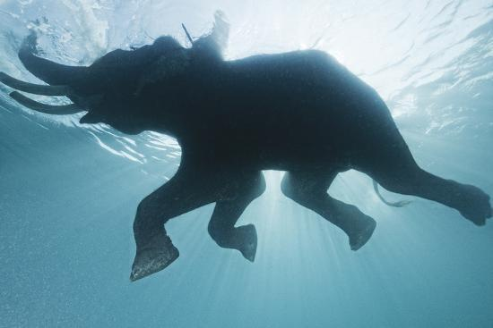 A Mahout, Rides Rajan the Elephant, While it Swims in the Andaman Islands-Cesare Naldi-Photographic Print