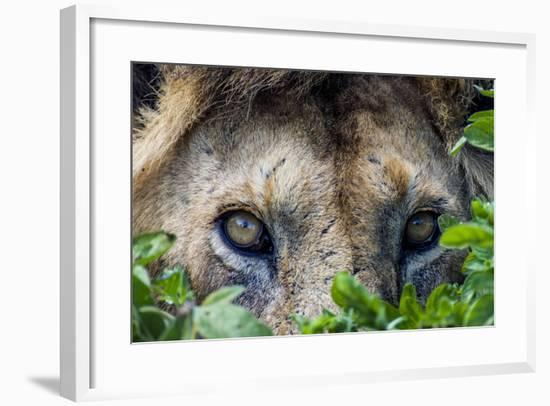 A Male African Lion Hunting Beside a Small Water Hole on a Vast Savannah Plain-Jason Edwards-Framed Photographic Print