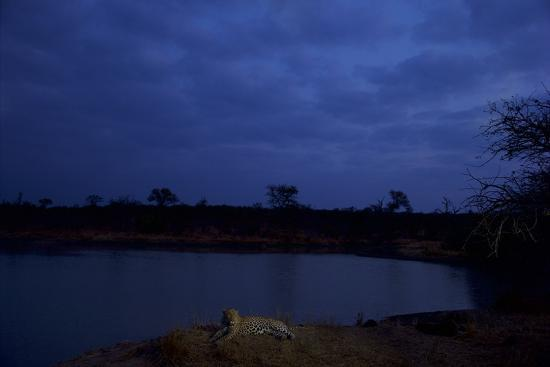 A Male Leopard Rests at the Water's Edge in South Africa's Sabi Sand Game Reserve-Steve Winter-Photographic Print