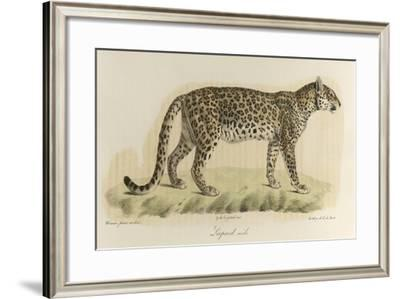 A Male Leopard--Framed Giclee Print
