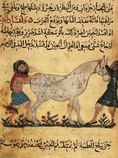 A Man Assisting a Mare Giving Birth to a Foal, Miniature from a Treatise on Horses--Giclee Print