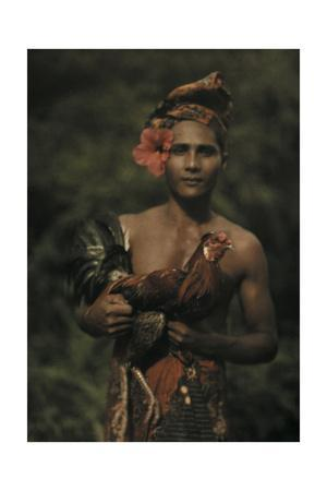 https://imgc.artprintimages.com/img/print/a-man-holds-a-rooster-used-in-bali-s-cockfighting_u-l-pojnj40.jpg?p=0