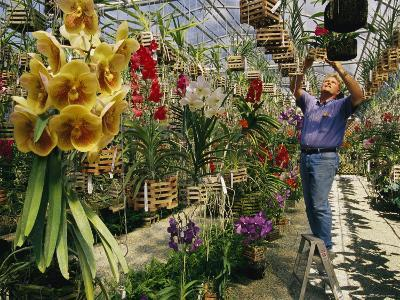 A Man Inspects Scores of Orchid Hybrids at His Florida Nursery-Jonathan Blair-Photographic Print