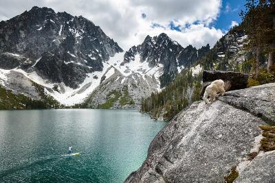 A Man On An Inflatable Paddle Board Passes A Foraging Mountain Goat At Colchuck Lake-Ben Herndon-Photographic Print