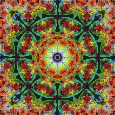 A Mandala from Flowers, Photograph, Many Layer Artwork-Alaya Gadeh-Photographic Print