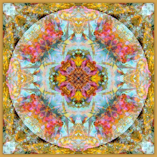 A Mandala Made Out of Flowers and Plants-Alaya Gadeh-Photographic Print