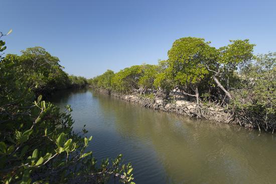 A Mangrove Forest Along an Inlet on Vansittart Bay, Western Australia-Jeff Mauritzen-Photographic Print