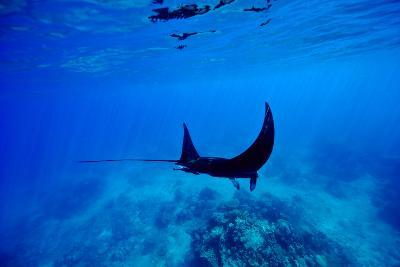 A Manta Ray Glides over a Reef Near the Surface of a Tropical Ocean-Jason Edwards-Photographic Print