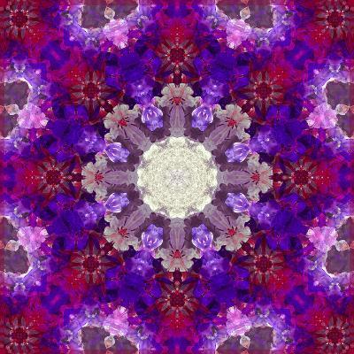 A Many Layered Flower Mandala-Alaya Gadeh-Photographic Print