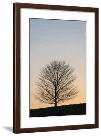 A Maple Tree at Brandywine State Park-Michael Melford-Framed Photographic Print