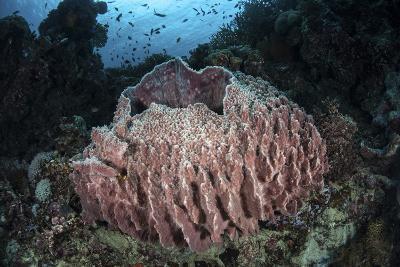 A Massive Barrel Sponge Grows N the Solomon Islands-Stocktrek Images-Photographic Print
