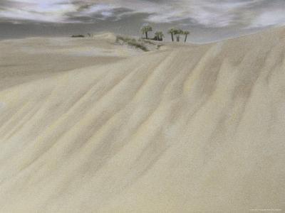 A Massive Sand Dune Dwarfs Trees on a Barrier Island-Annie Griffiths-Photographic Print