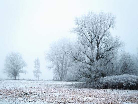 A Meadow in Winter--Photographic Print