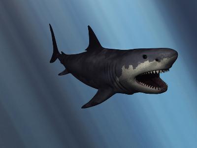 A Megalodon Shark from the Cenozoic Era-Stocktrek Images-Photographic Print