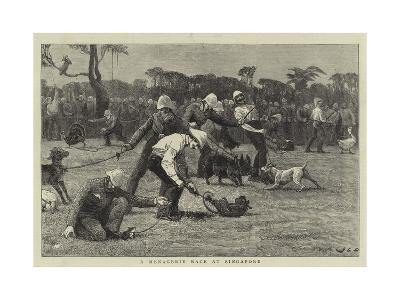 A Menagerie Race at Singapore-John Charles Dollman-Giclee Print