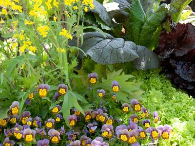 A Mixed Species Garden Patch with Pansies, Lettuce and Other Plants-Darlyne A^ Murawski-Photographic Print