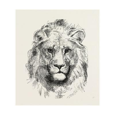A Modern Lion--Giclee Print