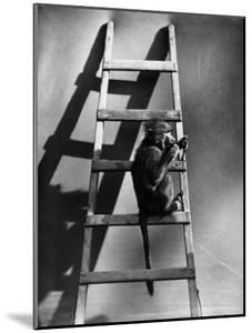 A Monkey on the Step of a Ladder