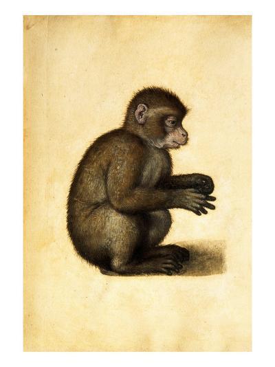 A Monkey-Albrecht D?rer-Giclee Print