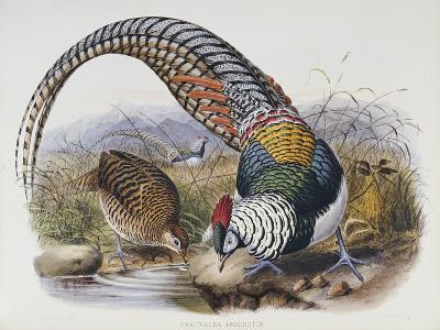 A Monograph of the Phasianidae or Family of Pheasants, 1872-Daniel Giraud Elliot-Giclee Print
