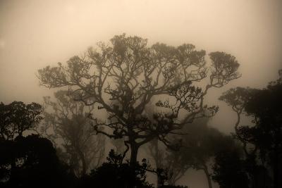 A Morning Mist in the Rainforest of Kerala-Prasenjeet Yadav-Photographic Print