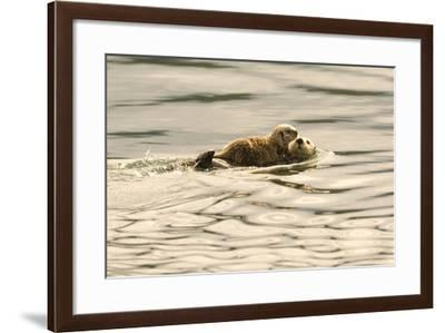 A Mother Sea Otter Swims on Her Back as Her Baby Rests on Her Stomach in Alaskan Waters-John Alves-Framed Photographic Print