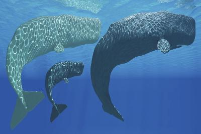 A Mother Sperm Whale with Calf Is Visited by an Interested Male--Art Print