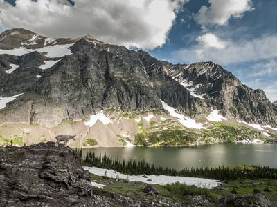 https://imgc.artprintimages.com/img/print/a-mountain-goat-in-glacier-national-park-montana_u-l-q10t5b60.jpg?p=0