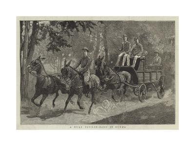 A Mule Four-In-Hand in Burma--Giclee Print