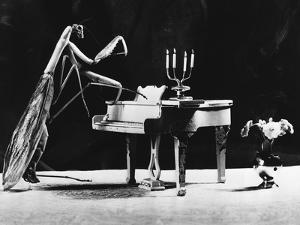 A Musical Praying Mantis