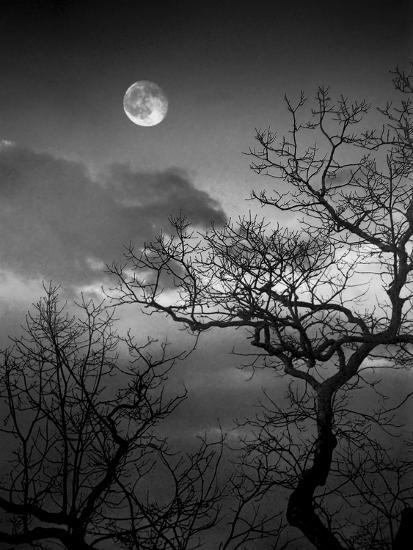 A Nearly Full Moon Sets over the Blue Ridge Mountains at Dawn-Amy & Al White & Petteway-Photographic Print