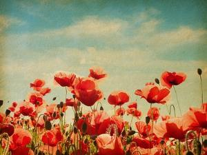 Vintage Paper Textures - Field of Poppies by A_nella