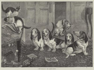 A New Dog-Fancy, the Bassett Hounds--Giclee Print